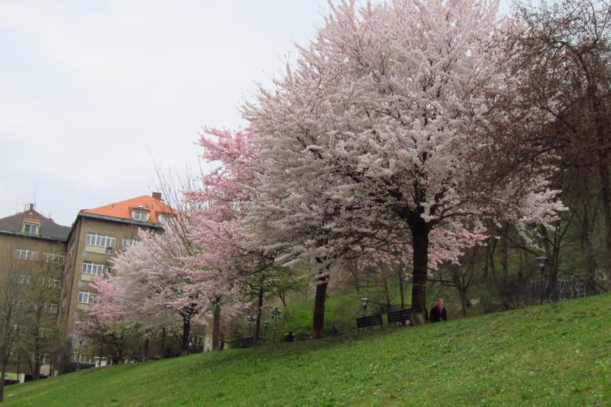 Петржинские сады