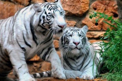 Пражский зоопарк – с любовью к природе!