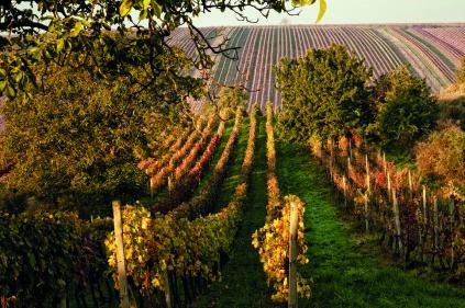 Винодельческие области Чешской Республики
