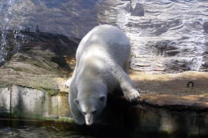 Туристическая Мекка Чехии – пражский зоопарк