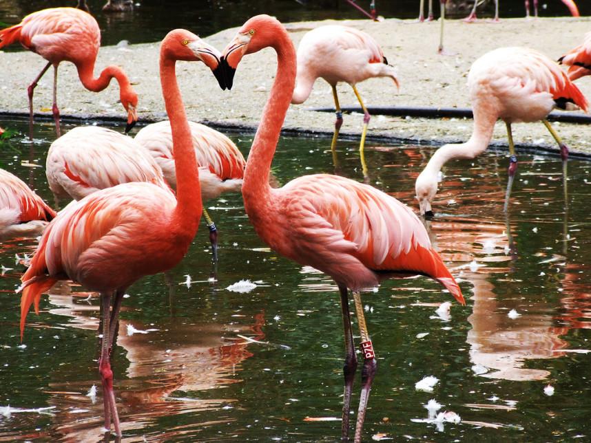 Обитатели зоопарка в Праге
