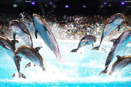 На юге Чехии будут строить аквапарк с дельфинарием